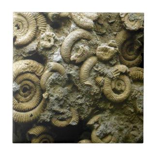 embedded snails fossils tile