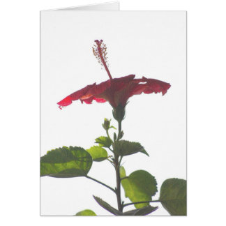Embossed Red Hibiscus, Into the Light Card