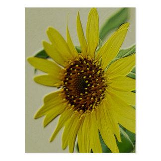 Embossed Sunflower Postcard