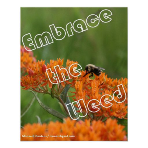 Embrace the Weed Print
