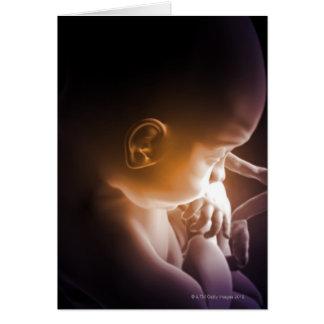Embryonic Development 5 Card