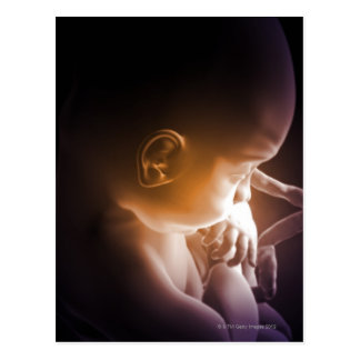 Embryonic Development 5 Postcard