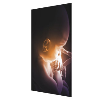 Embryonic Development Gallery Wrapped Canvas
