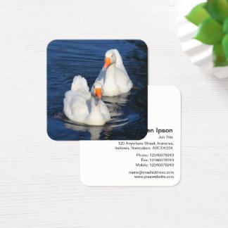 Emden Geese Square Business Card