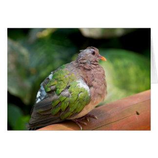 Emerald Dove Profile and Perch Card