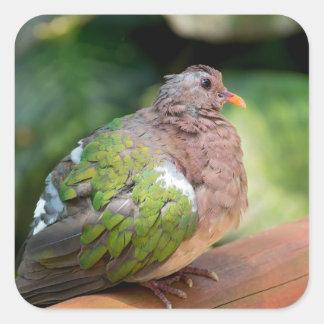 Emerald Dove Profile and Perch Square Sticker