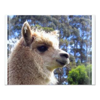 Emily Alpaca Card