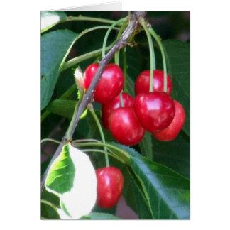 Emmett Cherries Cards