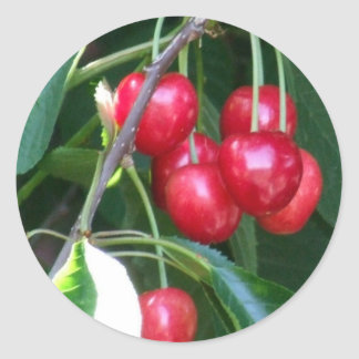 Emmett Cherries Round Sticker
