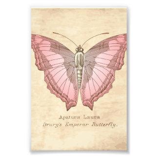 Emperor Butterfly Specimen Photo