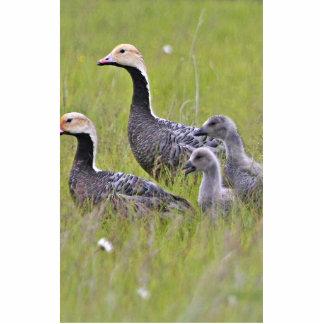 Emperor Goose Family Group Photo Sculpture