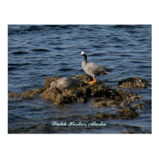 Emperor Goose & Great Grey Gull, Dutch Harbor, AK Postcard