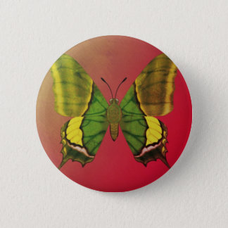 Emperor of India Butterfly 6 Cm Round Badge