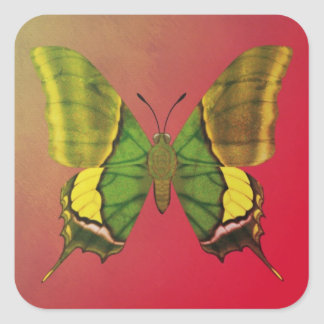 Emperor of India Butterfly Square Sticker
