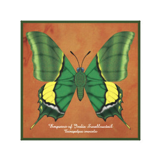 Emperor of India Swallowtail Canvas Print