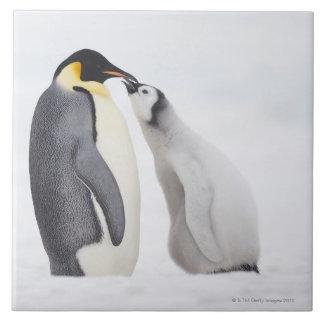 Emperor penguin (Aptenodytes forsteri), chick Ceramic Tile