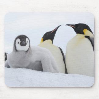 Emperor Penguin (Aptenodytes forsteri) Mouse Pad