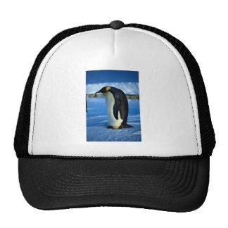 Emperor penguin by moonlight cap