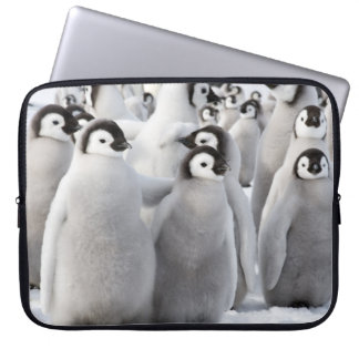 Emperor Penguin Chicks - laptop case Computer Sleeves