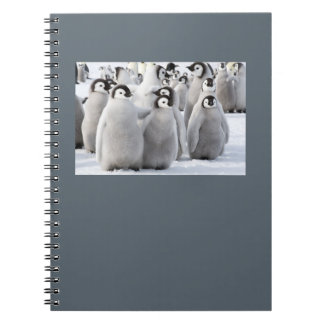Emperor Penguin Chicks notepad Notebook