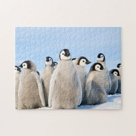 Emperor Penguin Chicks - puzzle