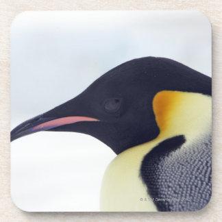 Emperor Penguin, Snow hill island, Weddel Sea Beverage Coasters