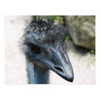Emu Bird Lookin at you Postcard