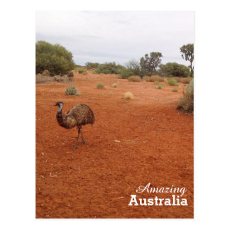 Emu in the Australian outback postcard