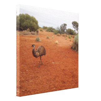 Emu in the outback canvas print
