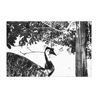 EMU QUEENSLAND AUSTRALIA WITH ART EFFECTS CANVAS PRINT