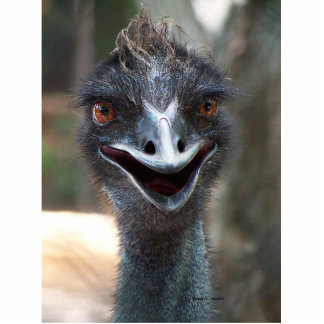 Emu saying HI! Open beak big brown eyes picture Photo Sculpture Badge