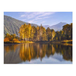 Enchanted Forest In Autumn Postcard