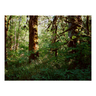Enchanted Forest Poster Print