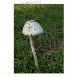Enchanted Mushroom Notecards (Blank Inside) Card