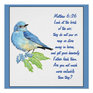 Encouraging Bible Scripture Matthew Bluebird