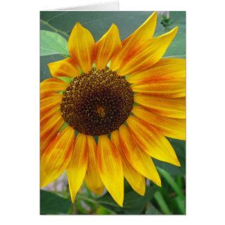 End of Summer Sunflower card