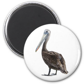 Endangered Brown Pellican (protected species) 6 Cm Round Magnet