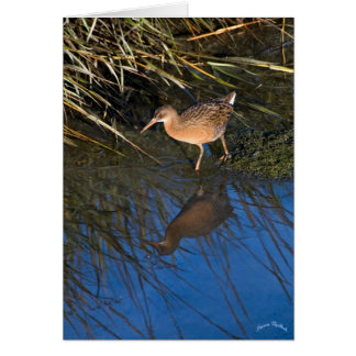 Endangered Clapper Rail Card