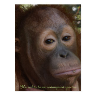 Endangered Species of Wildlife Orangutan Postcard