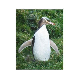 Endangered Yellow Eyed Penguin Canvas