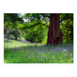 English Bluebells Postcard