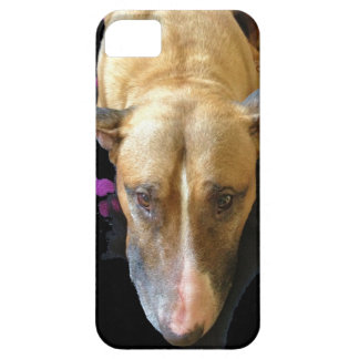 English Bull Terrier iPhone 5 Case