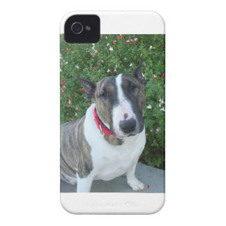 English bull terrier iPhone case Case-Mate iPhone 4 Cases