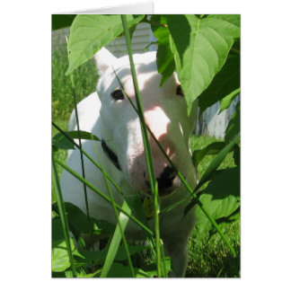 English Bull Terrier Peeking Through the Leaves Card