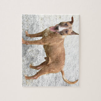 English Bull Terrier Puzzle