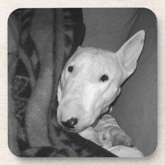 English Bull Terrier Snuggled Under a Blanket -BW Coaster