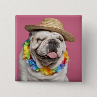English Bulldog (18 months old) wearing a straw 15 Cm Square Badge