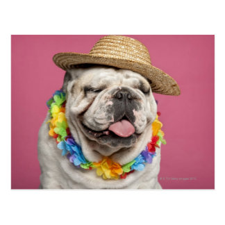 English Bulldog (18 months old) wearing a straw Postcard