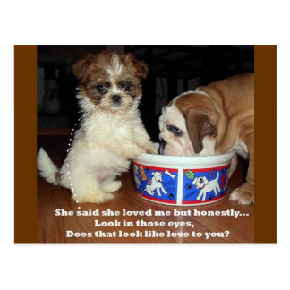 English Bulldog and Shih Tzu Puppy Postcard