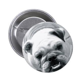 English Bulldog Pins